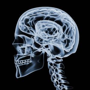 heroin on the brain